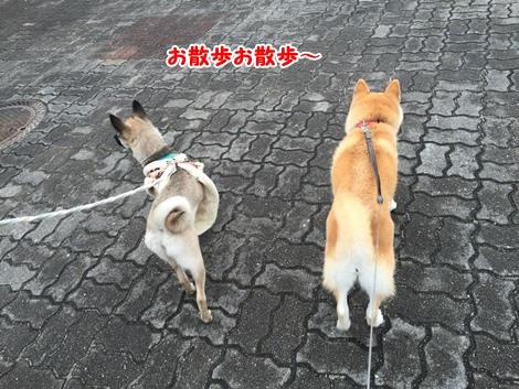 お散歩お散歩~