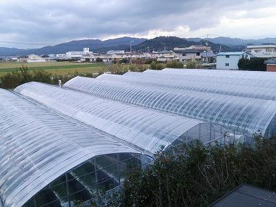 syougatu (1)