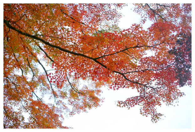 2015-11-09-06.jpg