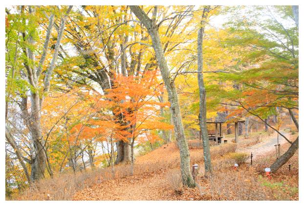 2015-11-09-15.jpg