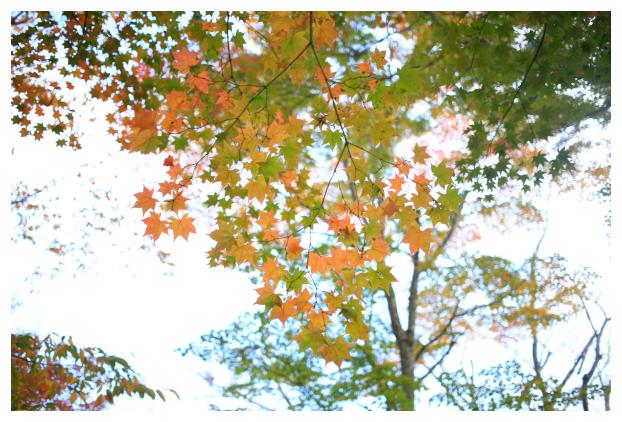 2015-11-09-18.jpg