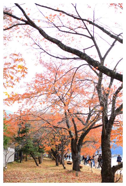 2015-11-10-39.jpg