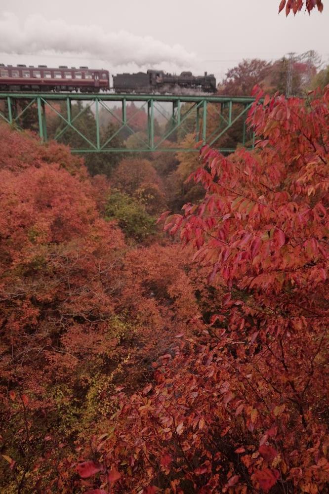 151108rainy-leaves-.jpg
