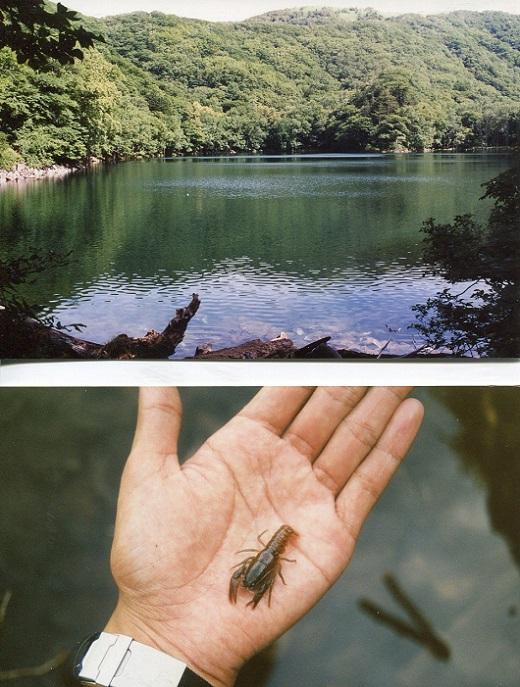 豊似湖とザリガニ