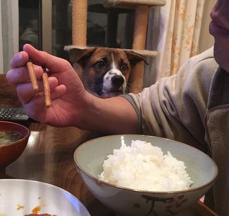 食べたいチャーくん