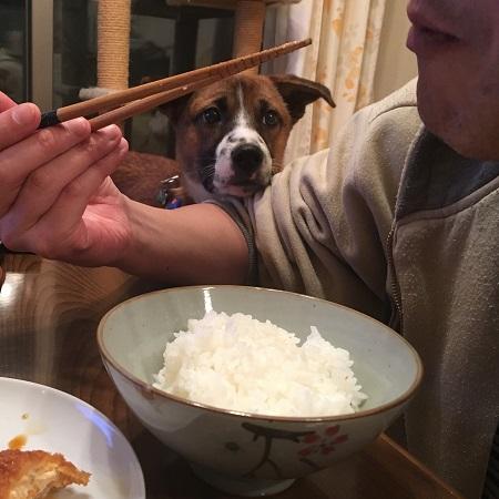 食べたいちゃーくん2