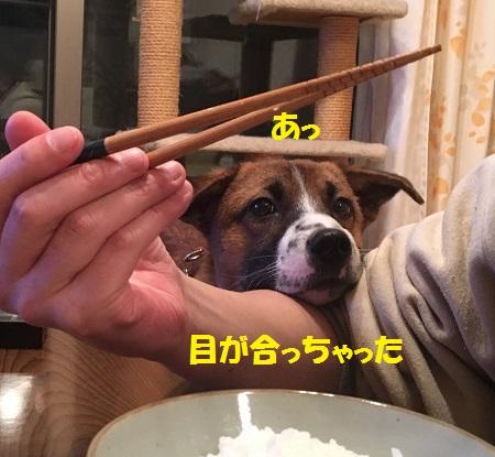 食べたいちゃーくん3
