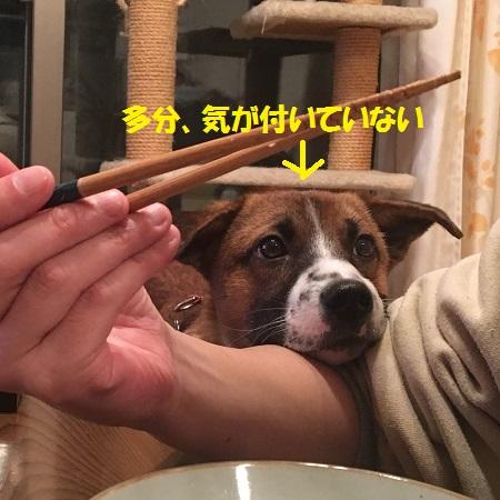 食べたいチャーくん2
