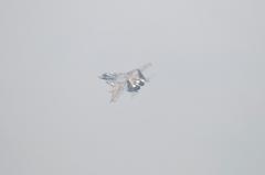Hyakuri AB_F-15DJ aggressor_33