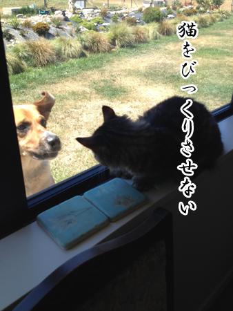羊の国のラブラドール絵日記シニア!!「もちこし2016年」7