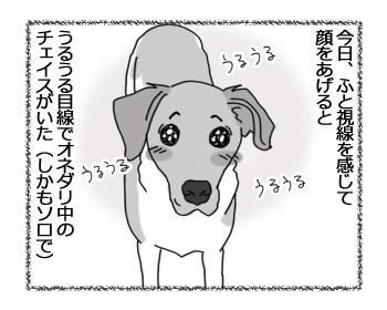 羊の国のラブラドール絵日記シニア!!「うる目くん」4