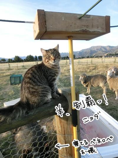 羊の国のラブラドール絵日記シニア!!「好奇心炸裂!」3
