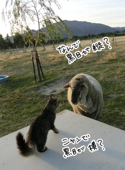 羊の国のラブラドール絵日記シニア!!「好奇心炸裂!」4