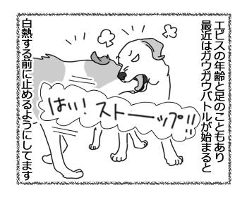 羊の国のラブラドール絵日記シニア!!「ダンスィー」1