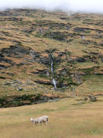 羊の国のラブラドール絵日記シニア「お散歩有給休暇」4
