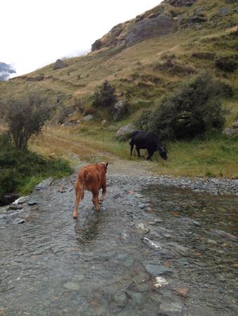 羊の国のラブラドール絵日記シニア「お散歩有給休暇」8