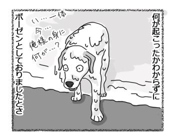 羊の国のラブラドール絵日記シニア!!「エビスー!うしろー!・・・の後は」6