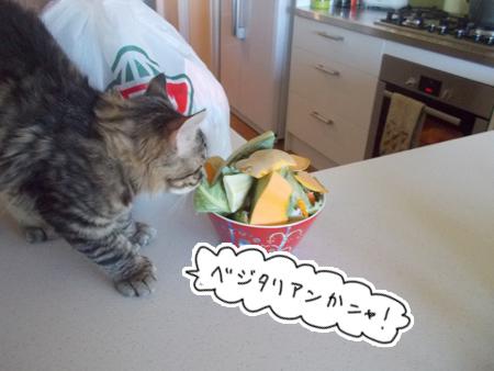 27122015_cat3.jpg