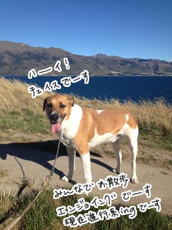 羊の国のラブラドール絵日記シニア!!「犬散歩、猫散歩」2