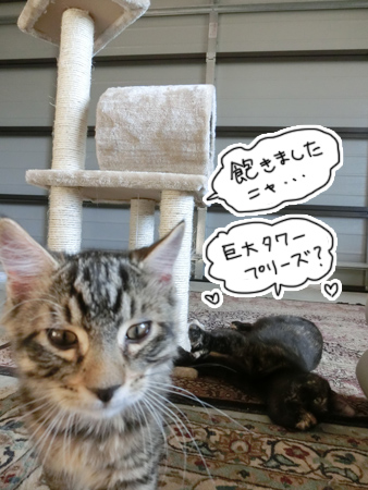 羊の国のラブラドール絵日記シニア!!「猫日記」1
