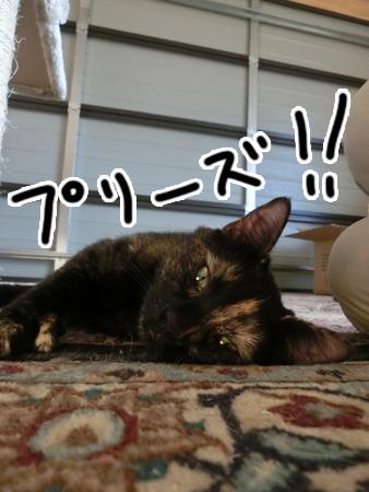 羊の国のラブラドール絵日記シニア!!「猫日記」2