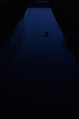 L1004613.jpg