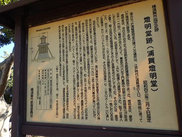 川津桜とマグロ丼 (30)