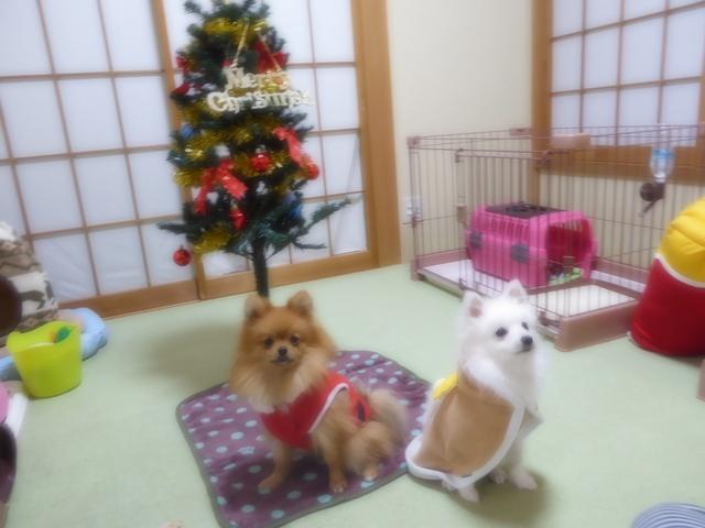 151220クリスマスツリー①