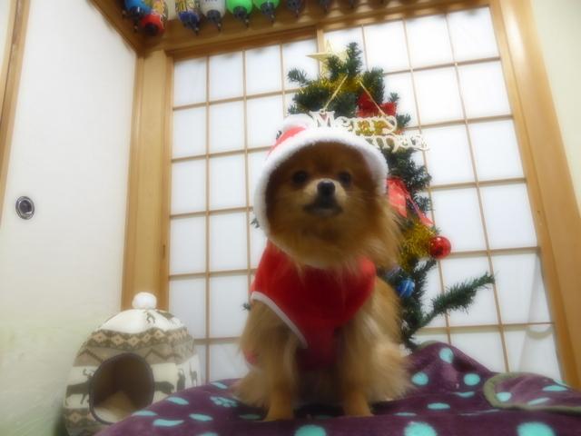 151220クリスマスツリー②
