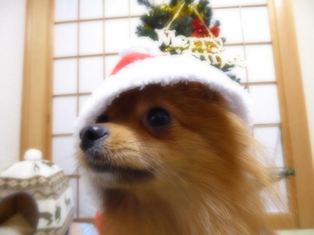 151220クリスマスツリー③