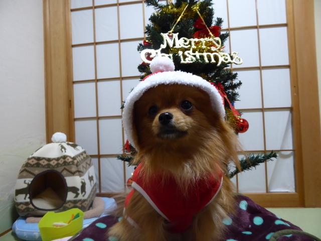 151220クリスマスツリー④