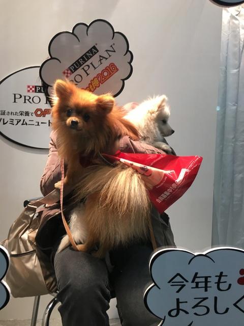160110ペット博横浜⑭