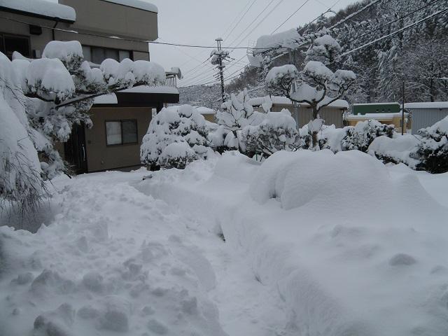 yuki1181.jpg