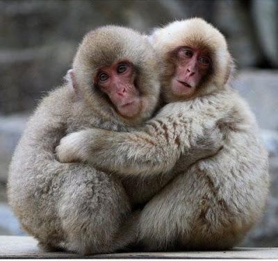 animal couples flickzzz_com 002-764463