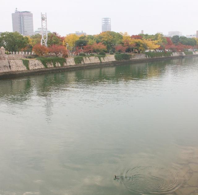 IMG_0420 川面に鵜が(640x628)