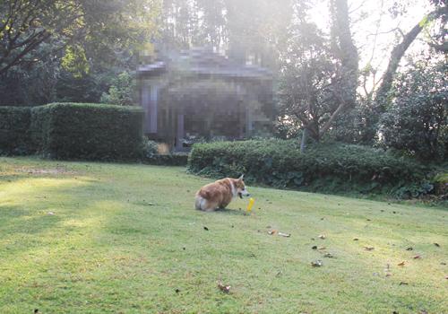 庭遊び1026