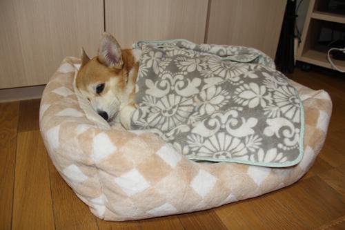 毛布を掛けられて