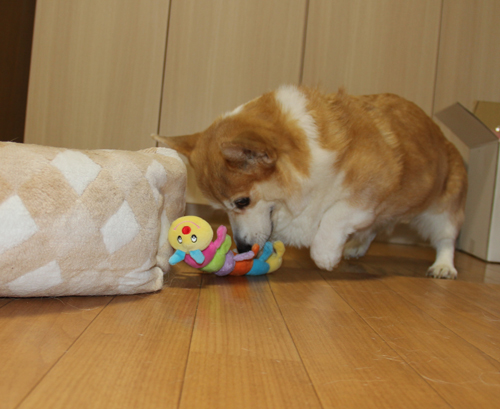 ハニーの誕生日6