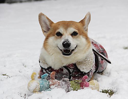2016雪楽しい