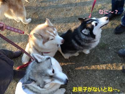 IMG_8655_convert_20160213212018.jpg
