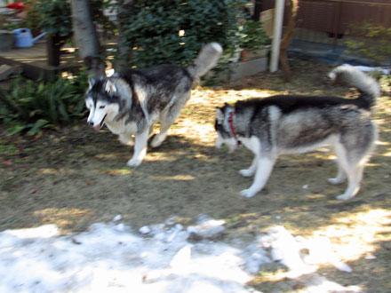 お庭で最後の雪遊び