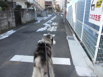 エヘエヘ散歩