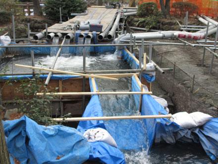 かいぼり中の井の頭池