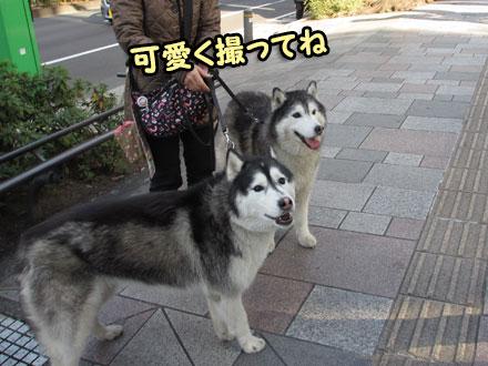 表参道エヘエヘ散歩