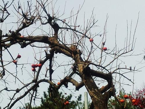 名残りの柿