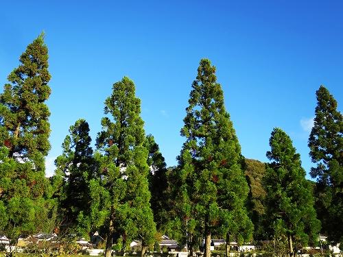 上青野の景色