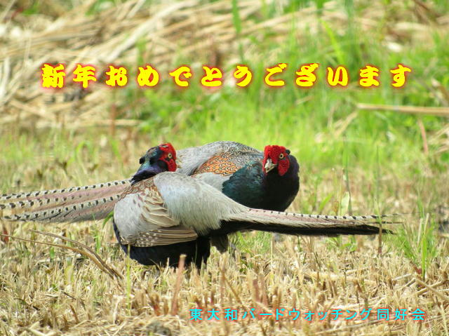 20160101 IMG_3488j