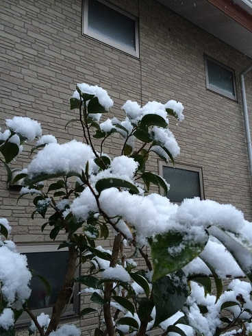 可愛い積雪