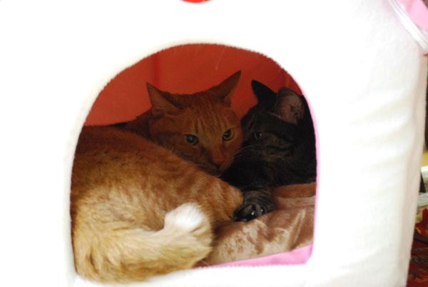 仲良く二人で猫ハウス