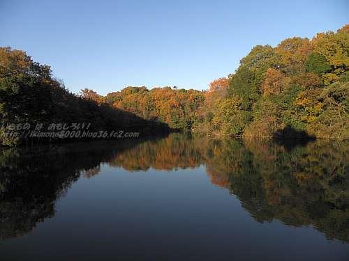 池に写る褐葉